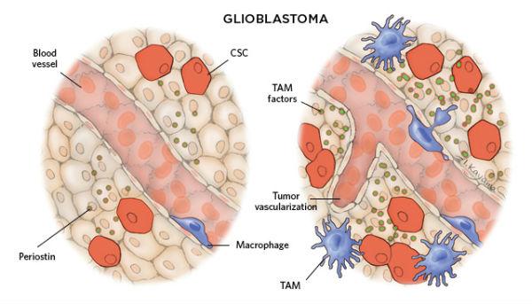 肝细胞超微结构模式图
