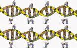 Nature子刊评估全外显子测序,有望成为新生儿的首个一线分子检测技术