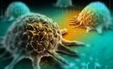 """eLIFE惊人发现:让癌细胞被健康细胞""""吃掉"""",能成为对抗癌症新途径吗?"""