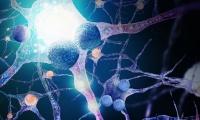 天津医科大学《Nature》子刊发文:免疫细胞加速正常人脑衰老