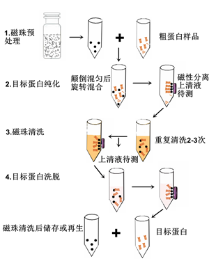 【英芮诚·免费试用】his标签蛋白纯化-------百纳米