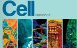 细胞出版社2015中国年度论文/机构揭晓(干细胞、表观遗传、基因编辑……)