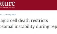 """改写认知!Nature:细胞""""自噬""""竟是抑癌新途径"""
