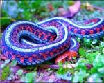 十种最惊艳的蛇:翡翠树蚺体长可达1.8米