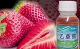 草莓专家揭开致癌农残的真相