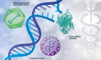 Science:晴天霹雳!公认最安全基因治疗载体AAV,竟有潜在致癌性