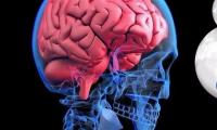 年龄越大,大脑屏障越强?Nature揭秘血脑屏障的年龄相关变化