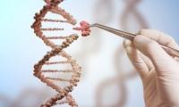 主动撤回论文!CRISPR基因编辑婴儿可能会早逝的研究出现重大错误