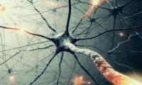 石墨烯—碳纳米管支架可模拟脑神经网络,未来将治疗脑部疾病