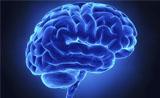 人脑连接结构如指纹一样独一无二 可作为个人身份标记