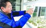 """中国转基因大米""""出国记"""" 首次在境外获得食用许可"""