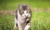 人类对于猫的喜爱,造就了世界上最成功的寄生虫