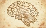 Nature长文报道基于DNA甲基化的中枢神经系统肿瘤分型