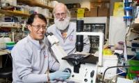 《自然》:面对癌症之王,中美科学家们联合找到了诊疗新思路