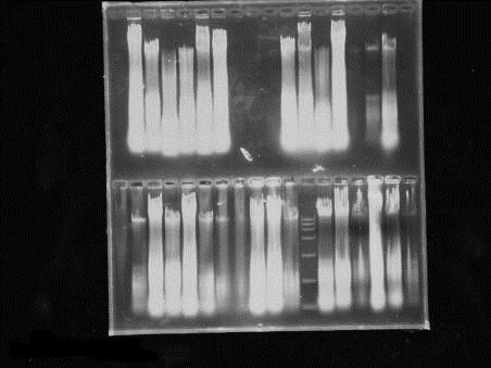 水稻DNA提取和纯化实验问题-实验交流-圈子-生物探索