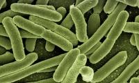 Cell:让细菌变成自养生物!靠消耗二氧化碳生长