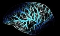 柳叶刀:这种全新疗法,把有效救治脑梗的时间窗延长到24小时