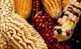 美国发布转基因食品标识新规,专家称对转基因食品发展利大于弊