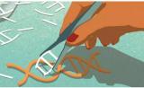 中科院杨辉博士团队:一步到位,CRISPR彻底敲除动物体内特定基因