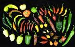 PNAS:四川农大等学者阐明辣椒的进化与驯化