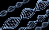 """什么都""""怪""""基因!爱吃啥、工资高低、幸福与否……"""