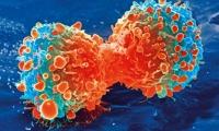 2020年全球CAR-T细胞领域研究进展TOP 10