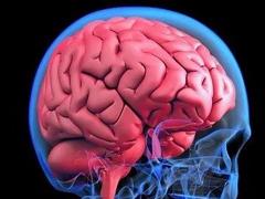 年齡越大,大腦屏障越強?Nature揭秘血腦屏障的年齡相關變化