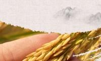 安诺甲基化测序技术助力水稻育种研究荣登PNAS