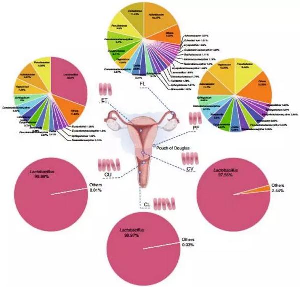 女性月经周期_BGI最新自然通讯论文:女性生殖系统中与健康相关的微生物群 ...