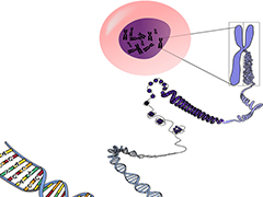 """""""RNA魔剪""""新成員""""面紗""""揭開 定位病變細胞更精準"""