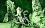 PNAS:刘善虑博士发表艾滋病重要研究发现