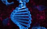 Twist Bioscience与泓迅科技达成合作,提供长片段DNA合成