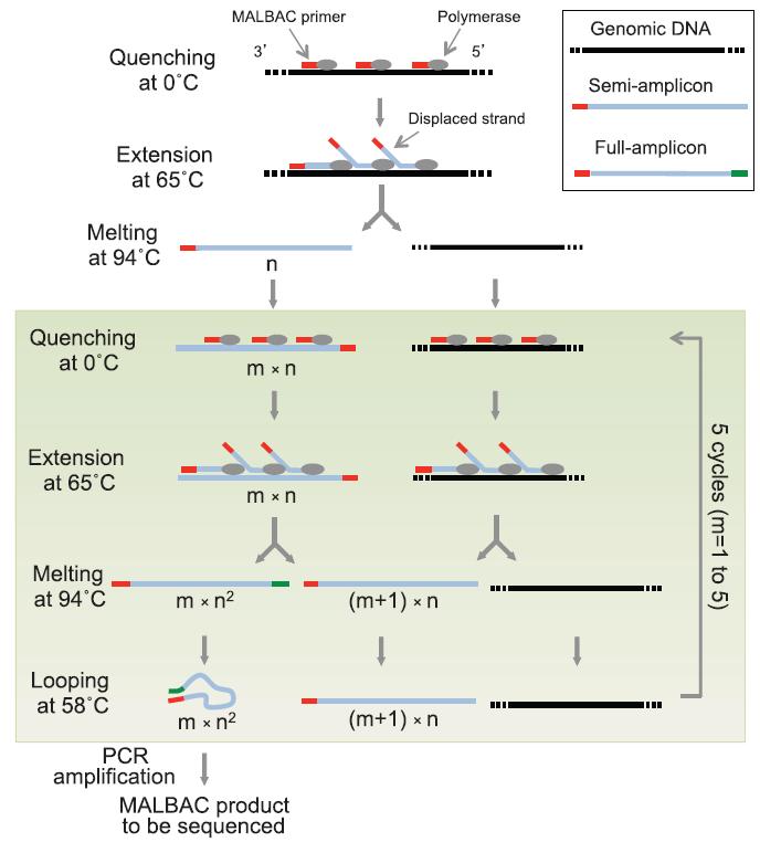 胞全基因组测序