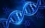 """想高效分析人类基因功能?试试""""反向遗传学"""""""