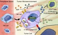 热门靶点CD73在实体瘤治疗领域取得哪些突破性进展呢?