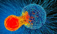 魔高一尺,道高一丈!清华大学徐萌团队发现能量代谢与肿瘤免疫逃逸的关系