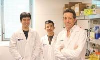 "Blood:科学家找到""定时炸弹""休眠癌细胞的关键""命门"""