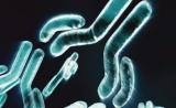 双特异抗体在实体瘤治疗上获重大突破