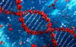 Cell:DNA修复必不可少的酶