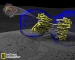 几大科学可视化佳作:乳腺癌细胞似外星生物