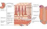 Nature子刊为癌症研究长期争议提出新见解:胃癌起源的新发现