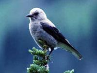 PNAS:3亿年前人类与鸟可能拥有共同祖先