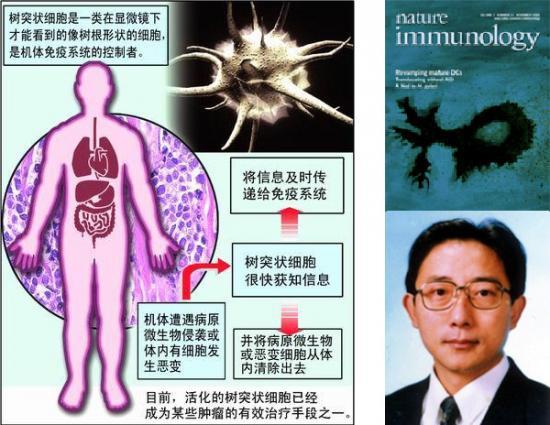 """树突状细胞 人体抵御重大疾病侵袭新""""哨兵"""""""
