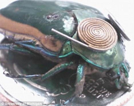 这个绿色的昆虫身上有一个微型运动发电机,为摄像机和麦克风供电