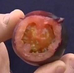 黑色西红柿果肉仍然是红色的