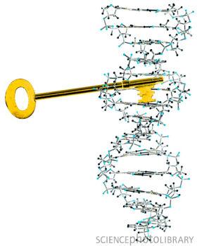 2011年Nature年度技术:基因组编辑