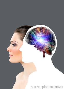 Cell:张遐等发现胶质细胞调控大脑高级功能的直接证据