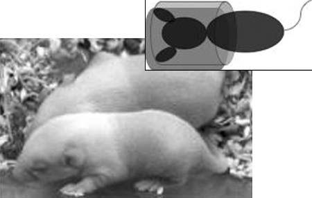 PANS:旁观者效应暗示低剂量辐射致癌