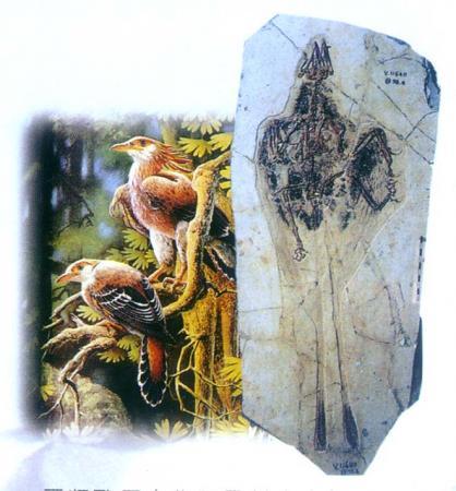 远古鸟类与恐龙可能为同时期灭绝