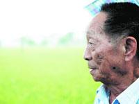 袁隆平双季超级杂交稻亩产过1000公斤